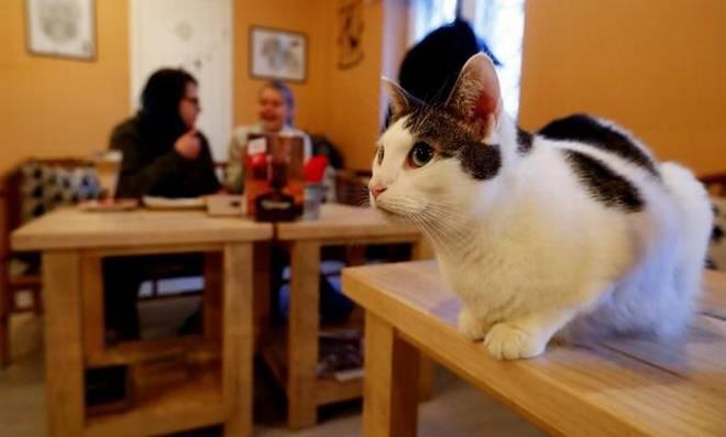 Resultado de imagen para cat cafe uruguay