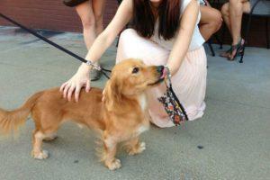 24 cruzas de razas de perros que son doblemente adorables