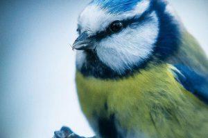 Estos probablemente sean los animales más fotogénicos del mundo