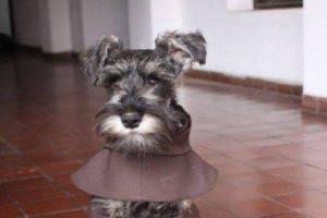 Este es el primer perro oficialmente reconocido como monje Franciscano